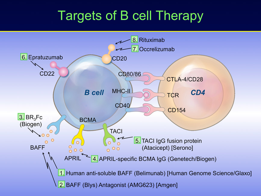 targets-of-B-cell-Therapy